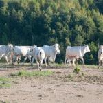 agriturismo con fattoria in umbria